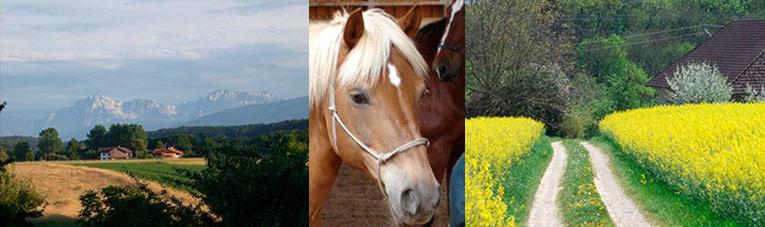 Energie und Fokus ausrichten – Persönlichkeitscoaching mit Pferden